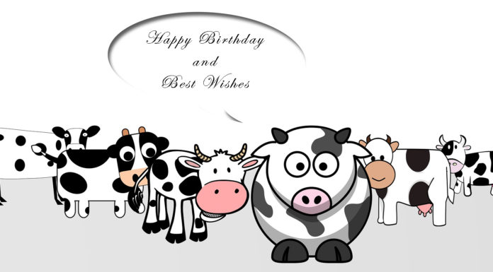 Funny Birthday Cards for Cute Friends