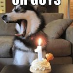 funny dog birthday meme